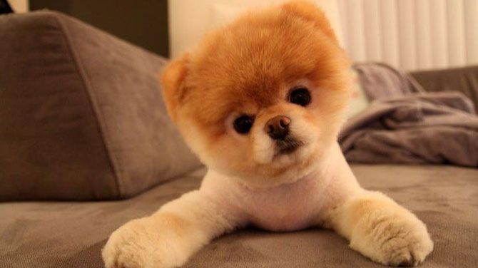 The Cutest Dog Breeds